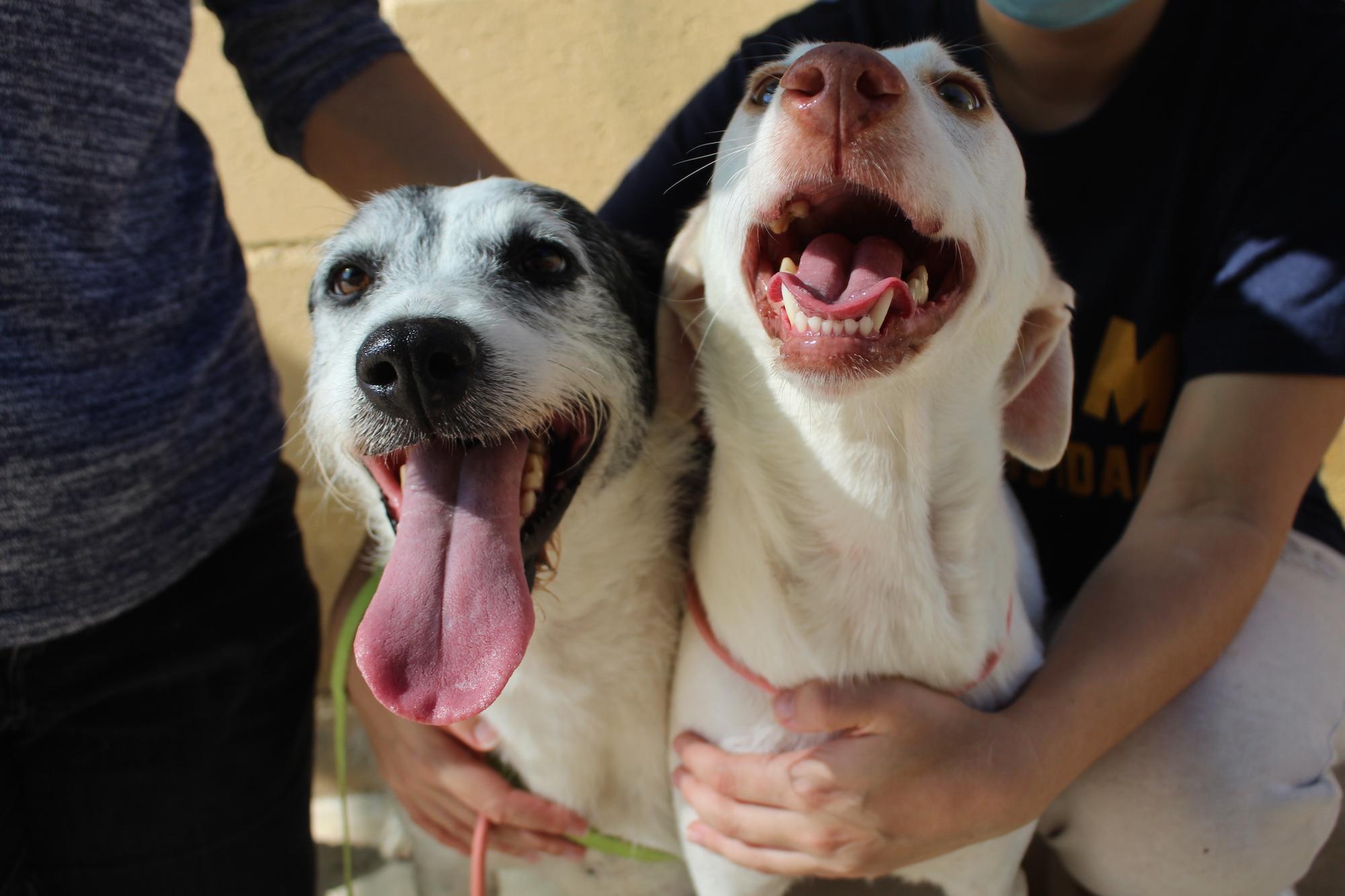 Luna & Perla (2)