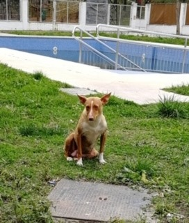 pepa-fadderhund-gpar-6