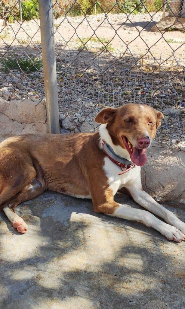 puna-fadderhund-gpar-4
