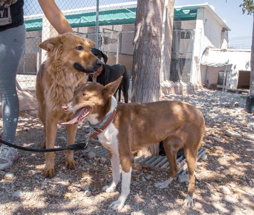 puna-fadderhund-gpar-6