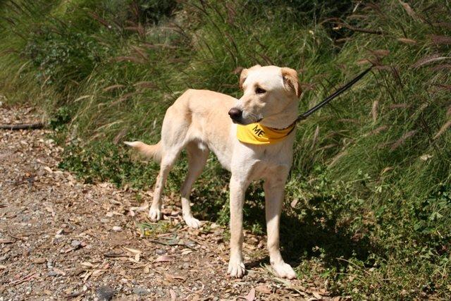 Bailey (7)