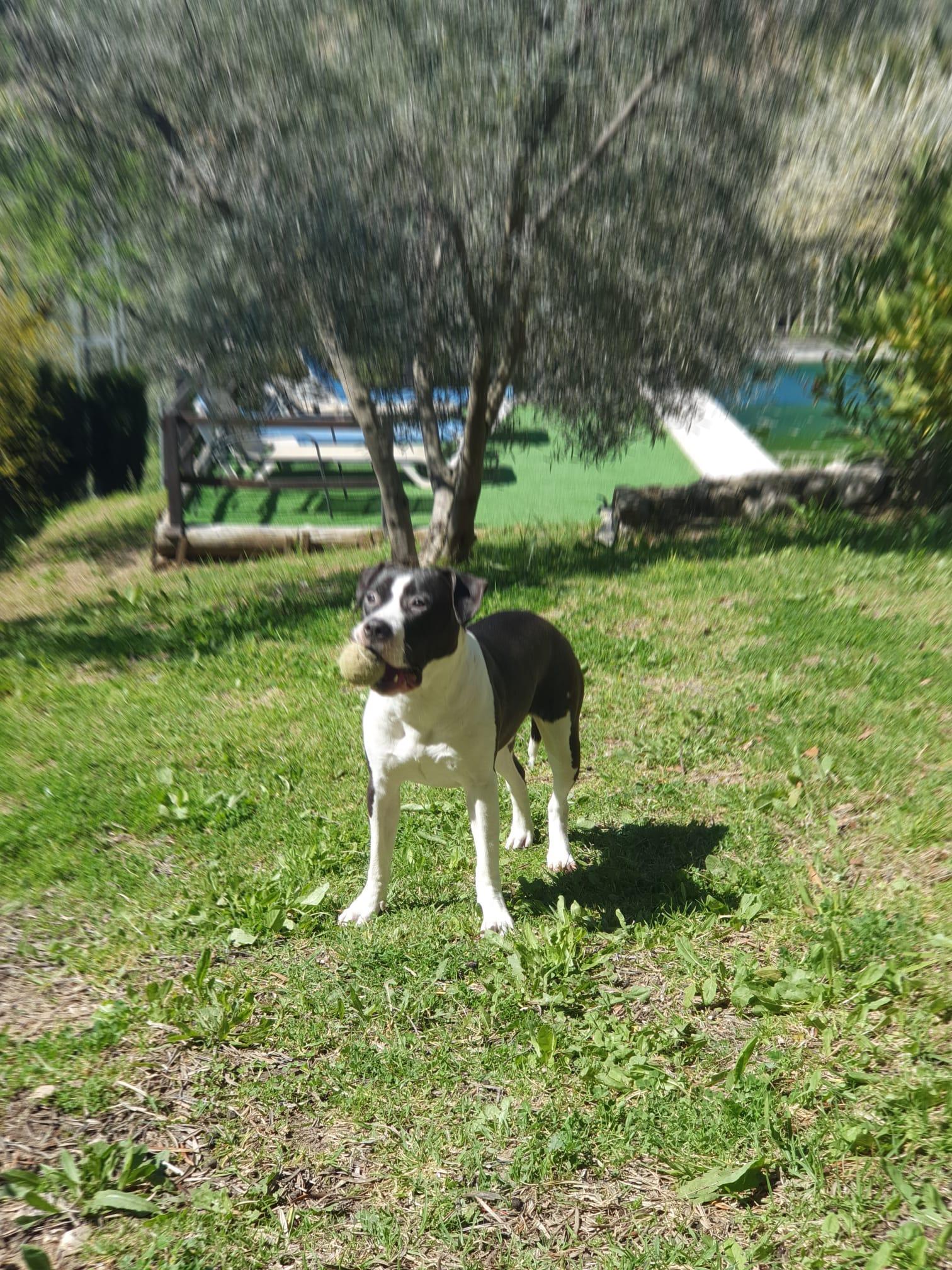Leona (13)